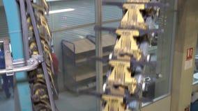 Druckhaus stock video footage