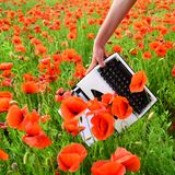 Drug, narcotics, opium, novel. Journalism and writing, summer. Poppy, new technology, Remembrance day. Opium poppy, agile business ecology Vintage typewriter royalty free stock images