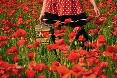 Drug, narcotics, opium, study. Journalism and writing, summer. Poppy, new technology, Remembrance day. Opium poppy, agile business ecology Education business royalty free stock images