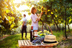 Druif en wijnsamenstelling Stock Foto's