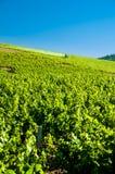 Druif het oogsten met tractor, Beaujolais, Frankrijk Royalty-vrije Stock Afbeeldingen