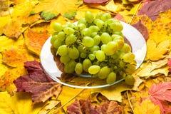 Druif op de achtergrond van de herfstbladeren Royalty-vrije Stock Foto's
