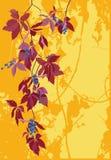 Druif op grungeachtergrond Stock Afbeeldingen