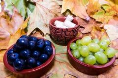 Druif voor wijnstok Stock Fotografie