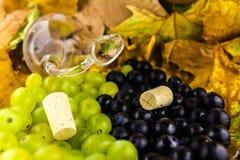 Druif voor wijnstok Royalty-vrije Stock Foto