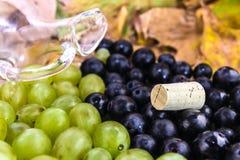 Druif voor wijnstok Stock Foto