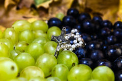Druif voor wijnstok Royalty-vrije Stock Afbeeldingen