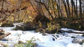 druing秋天季节,日本的Oirase峡谷美丽的河 股票视频