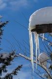 Druipende ijskegels Stock Afbeeldingen