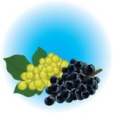 Druiven stock illustratie