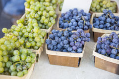 Druiven 1 Stock Foto