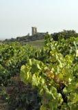 Druiven in Chateaueuf royalty-vrije stock afbeeldingen