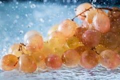 Druiven in dalingen en plonsen van dalend water Stock Fotografie