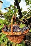 Druiven in een mand Stock Foto's