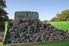 Druiven in een vrachtwagen Royalty-vrije Stock Afbeeldingen