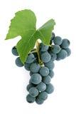 Druiven en blad Stock Afbeeldingen