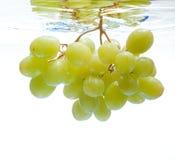 Druiven in het water Stock Afbeelding