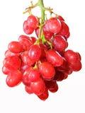Druiven kleine grootte op witte blackground Royalty-vrije Stock Fotografie
