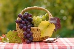 Druiven in kleine mand Royalty-vrije Stock Afbeeldingen