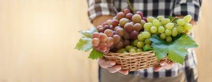 Druiven in landbouwers` s handen royalty-vrije stock foto