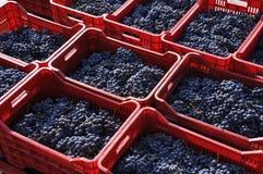 Druiven in manden Stock Afbeelding