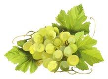 Druiven met bladeren Stock Fotografie