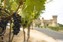 Druiven met kasteel Royalty-vrije Stock Fotografie