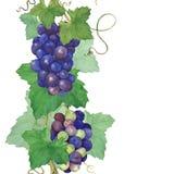 Druiven Naadloze grens Stock Afbeeldingen