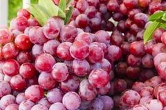Druiven op markttribune Stock Fotografie