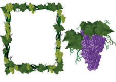Druiven op wijnstok in frame Stock Afbeeldingen