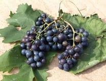 Druiven op wijnstokbladeren royalty-vrije stock foto