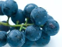 Druiven tegen witte achtergrond Royalty-vrije Stock Foto