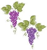 Druiven (Vector) stock illustratie
