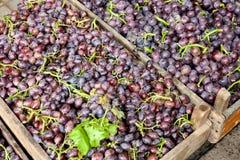 Druiven voor verkoop Royalty-vrije Stock Fotografie