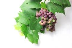 Druiven voor vervaardigingsFout stock foto's