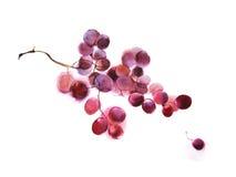 Druiven, waterverf stock foto's