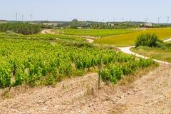 Druivenaanplanting en windlandbouwbedrijf stock afbeeldingen