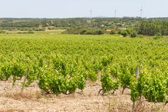 Druivenaanplanting en windlandbouwbedrijf royalty-vrije stock fotografie