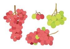 Druivenbes en rozijnenfruit op witte achtergrondillustratievector stock illustratie