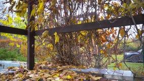 Druivenbladeren op een houten platform stock footage