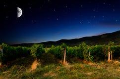 Druivengebied Royalty-vrije Stock Fotografie