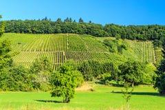 Druivengebieden in Duitsland Stock Afbeelding