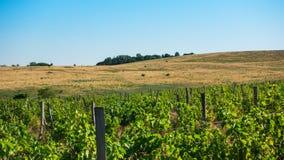 Druivengebieden en hellingen op de horizon royalty-vrije stock foto