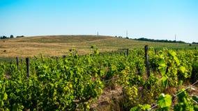 Druivengebieden en hellingen op de horizon royalty-vrije stock afbeelding