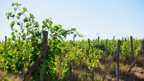 Druivengebieden en hellingen op de horizon stock afbeeldingen