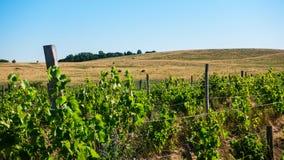 Druivengebieden en hellingen op de horizon stock fotografie
