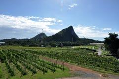 druivenlandbouwbedrijf royalty-vrije stock foto's
