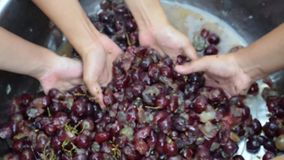 Druivenvruchten huiswijn die het grondige verpletteren van fruit met vele jonge vrouwelijke naakte handen verwerken stock videobeelden