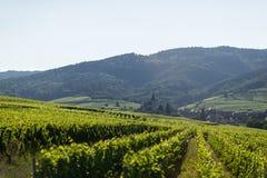 Druivenwerf in Eguisheim, Frankrijk royalty-vrije stock afbeelding