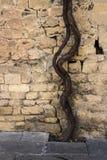 Druivenwijnbouw dichtbij de muur van de oude verdedigingstorens van de vesting van Baku stad Stock Foto's